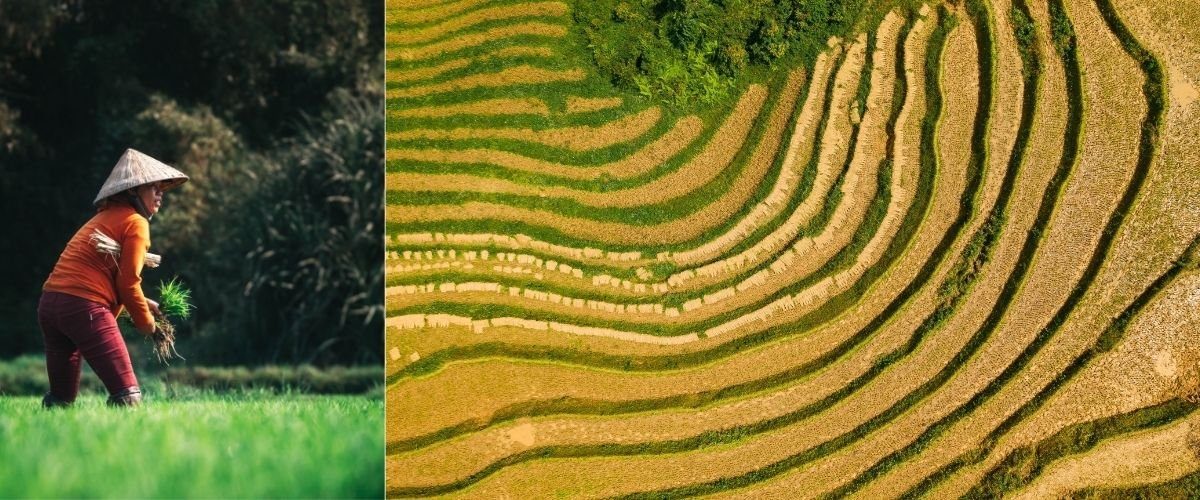 Your Guide to AgriTech in Vietnam
